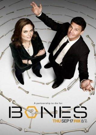 Скачать сериал  Кости / Bones - 8 сезон (2012)